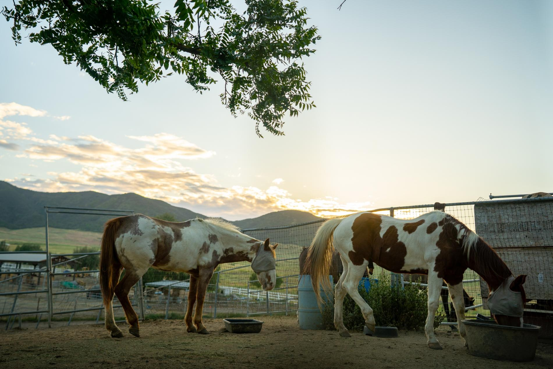 Apartment Hakuna Moscato - RV on Horse Ranch photo 20151745